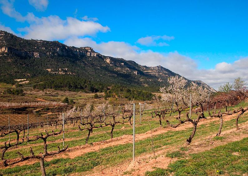 Agricultura a Catalunya. La Terra Alta i el Priorat